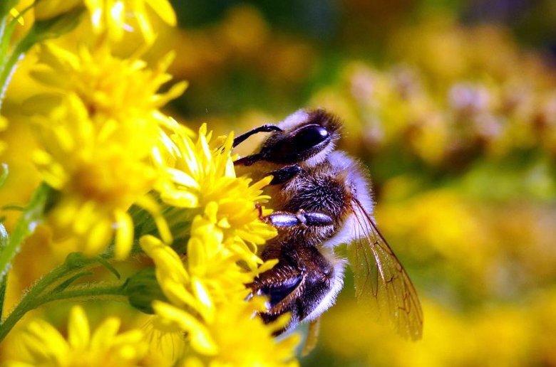 Insecticidas. Union Europea Legislacion