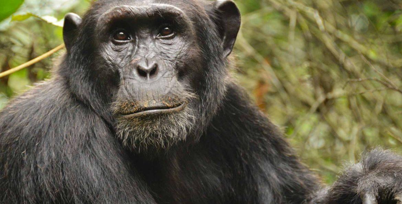 Variantes genes humanos y primates. Estudio