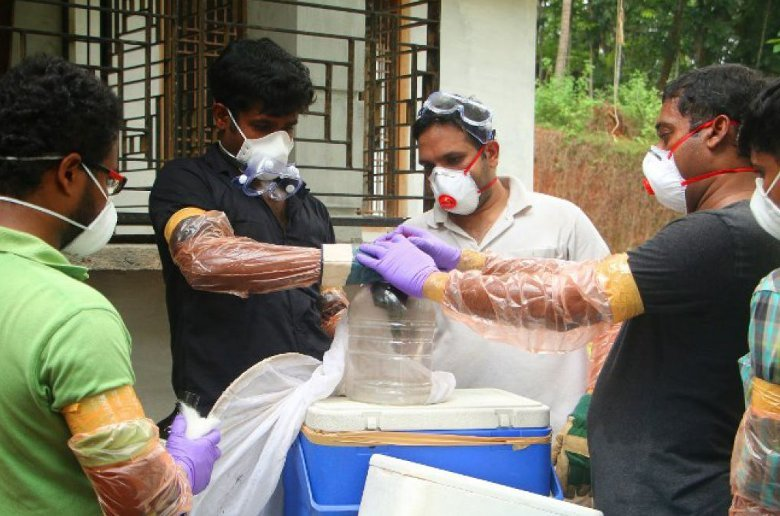 Virus Nipah (NiV). India