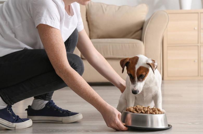 Alimentacion ecologica perros