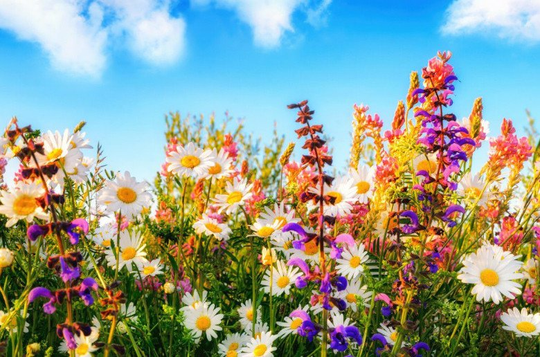 Flores eventos